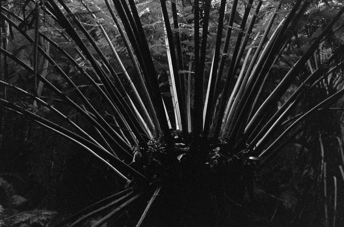The Otways, Victoria - Jesse Dodds